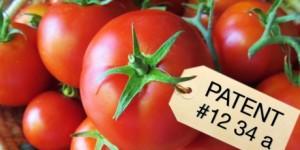 Tomates AVAAZjpg